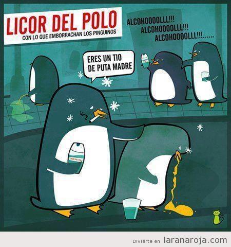 Humor gráfico, pingüinos borrachos por beber Licor del Polo